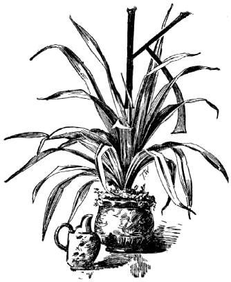 Potted Plant Drawing