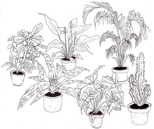 Potted Plant Drawing at GetDrawings com | Free for personal