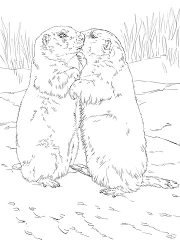 360x480 Kissing Prairie Dogs Coloring Page Free Printable Coloring Pages