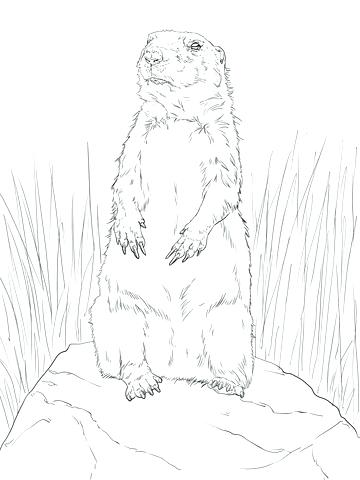 360x480 Beautiful Prairie Dog Coloring Page New Standing Up Free Printable