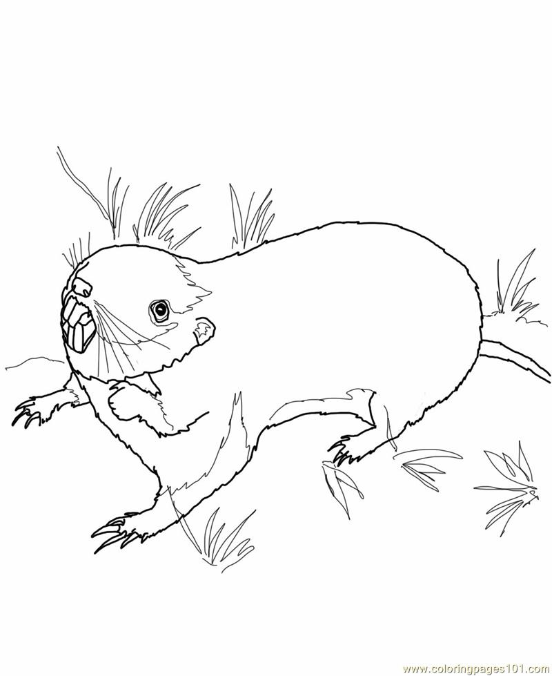 800x979 Prairie Dog Coloring Pages