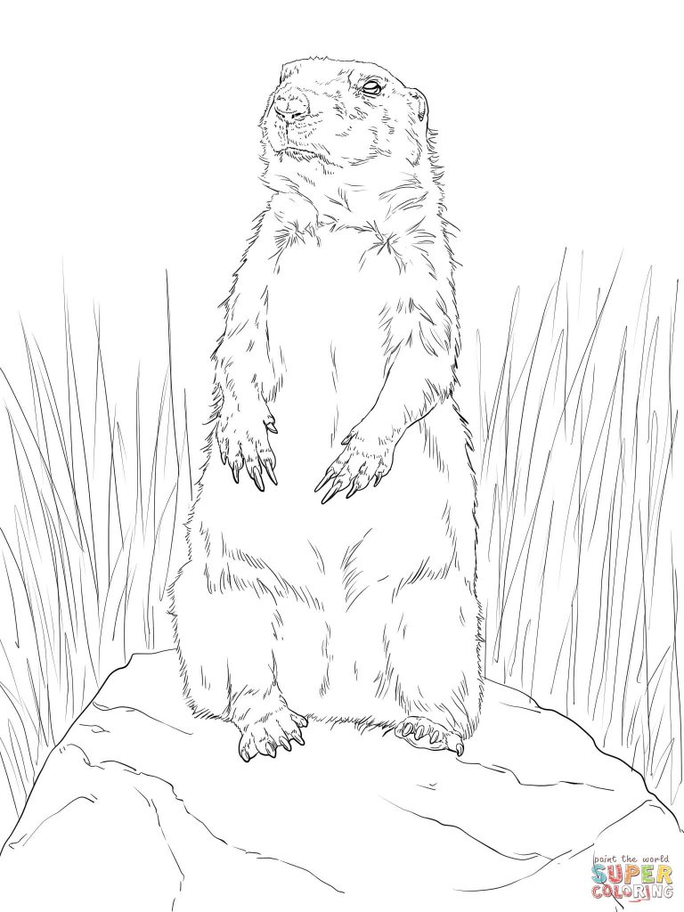 768x1024 Prairie Dog Standing Up Coloring Page Print Download