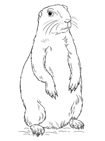 359x480 Prairie Dog Standing Coloring Page Free Printable Coloring Pages