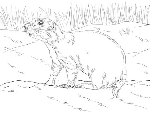 480x360 Realistic Prairie Dog Coloring Page Free Printable Coloring Pages