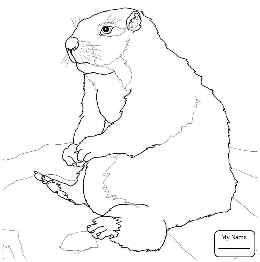 1012x1020 Coloring Pages Brown Prairie Dog Ground Squirrel Mammals