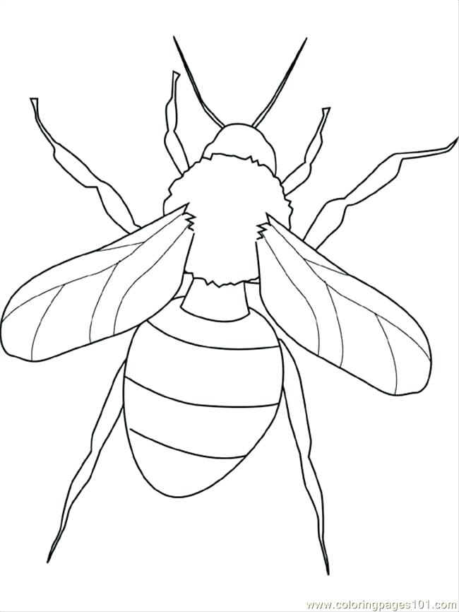650x866 Praying Mantis Coloring Page Insect Coloring Pages For Kids