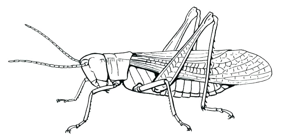 961x475 Praying Mantis Coloring Page Open And Print This Christian