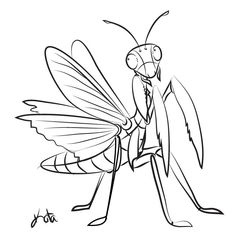 792x792 Praying Mantis Sketch By Kata