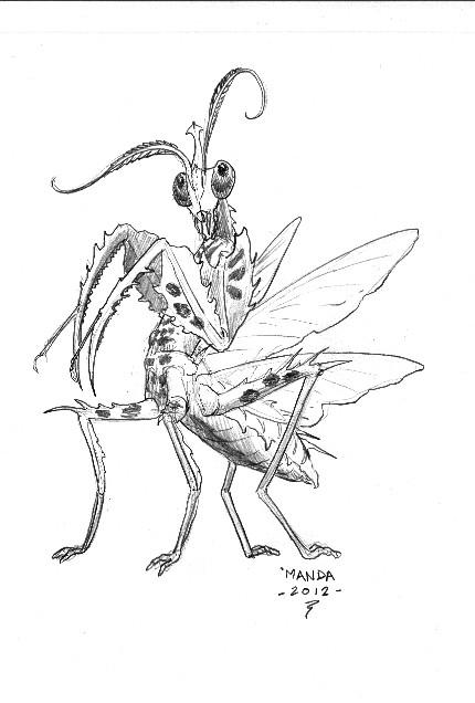 430x636 Praying Mantis By Talzhemir1