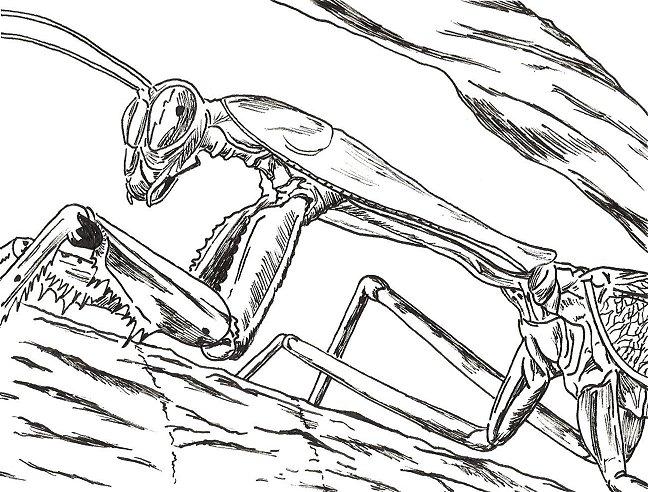 648x492 Praying Mantis By Johnkdesign