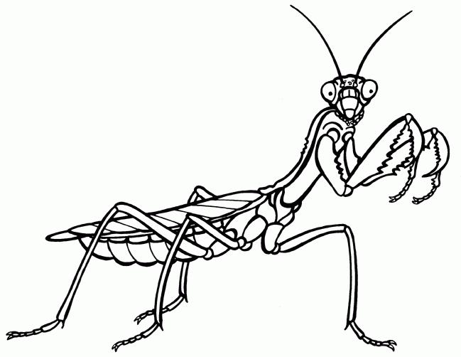 649x502 Prime Praying Mantis Clip Art 36 On Animations With Praying Mantis
