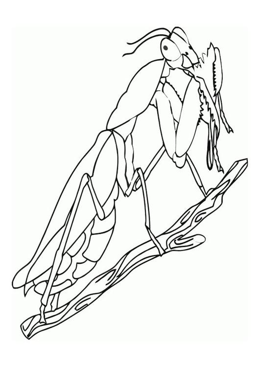 531x750 Coloring Page Praying Mantis
