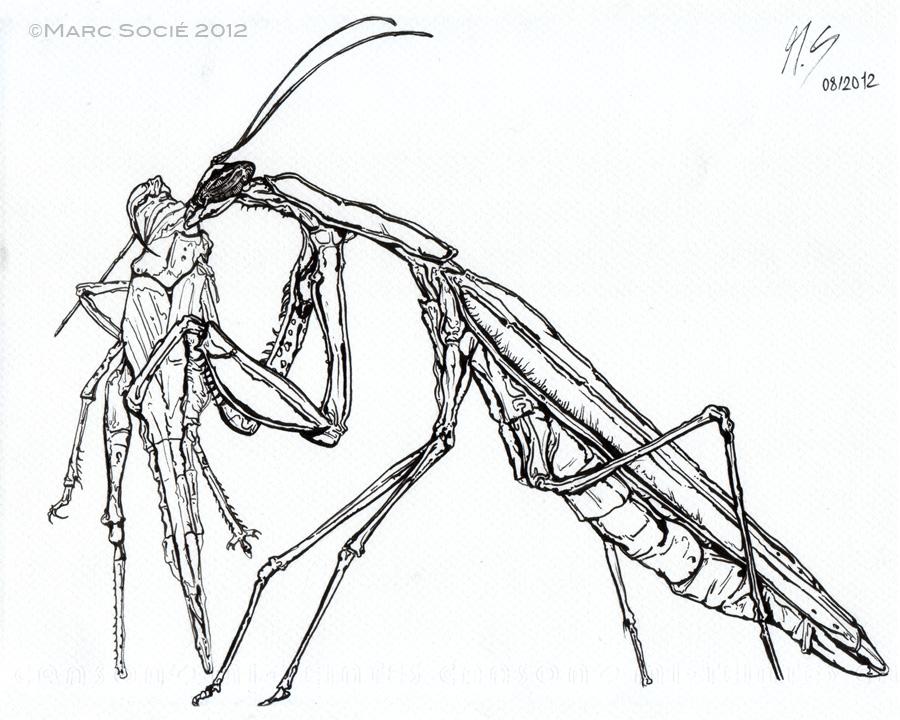 900x720 Mantis Search Results The Smaller Majority By Piotr Naskrecki