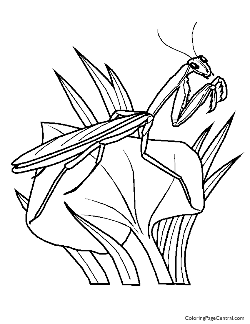 850x1100 Praying Mantis 01 Coloring Page Coloring Page Central