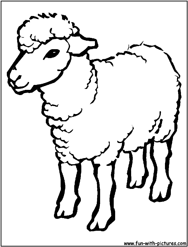 800x1050 Sheep Outline Drawing Coloring Page