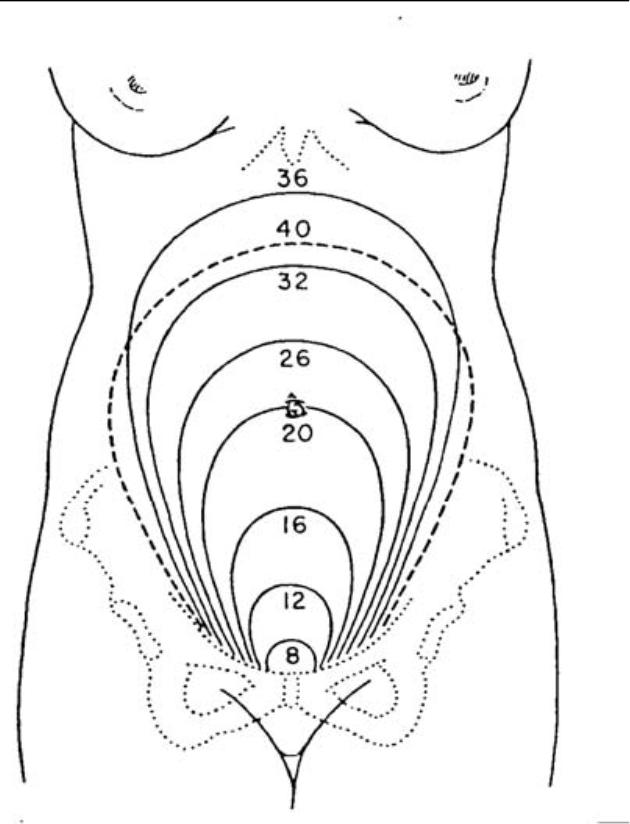 630x824 5.02 Changes Of The Reproductive System During Pregnancy