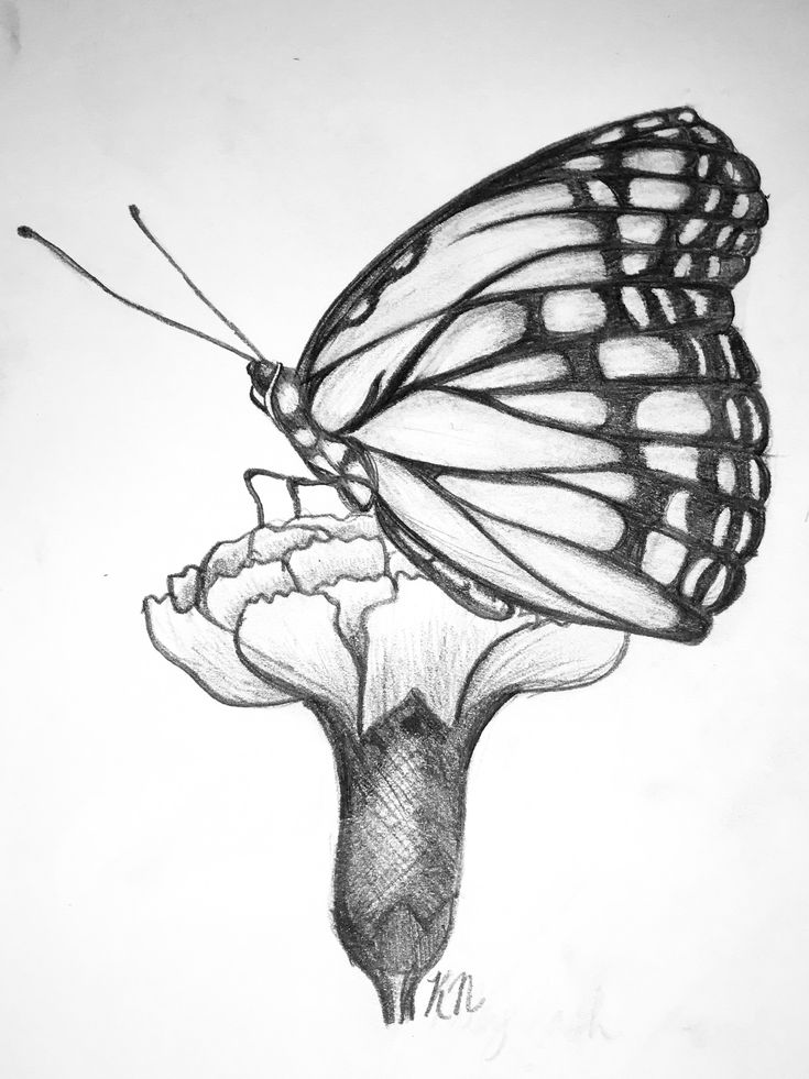 Pretty Butterfly Drawing