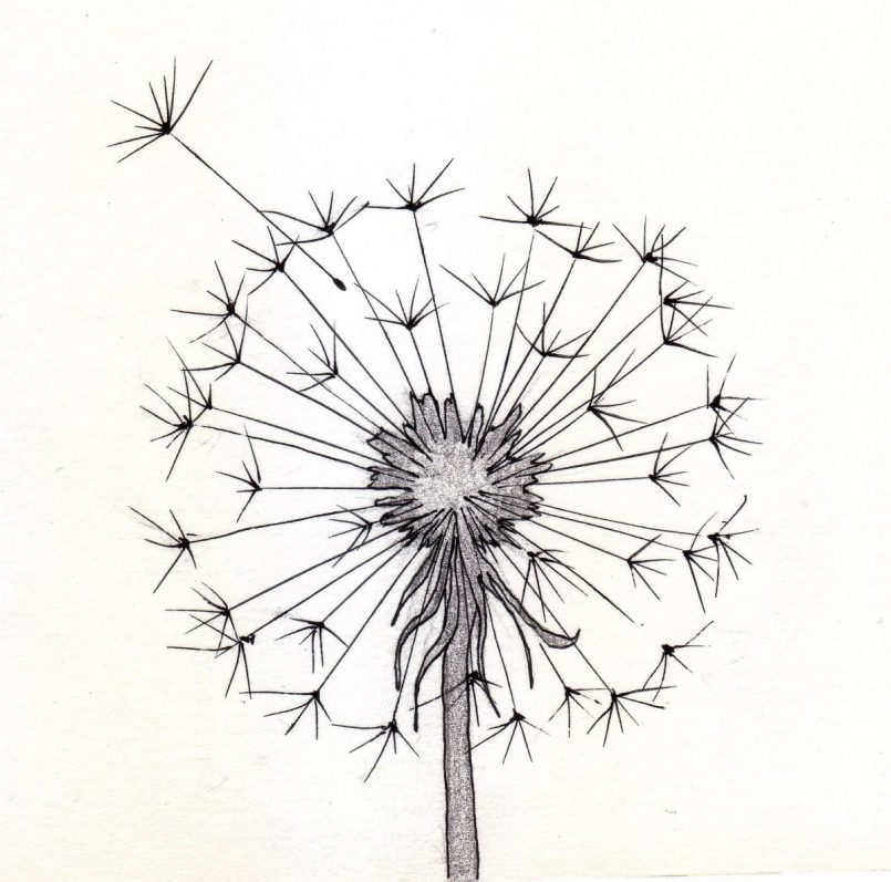805x797 Drawing Of A Flower