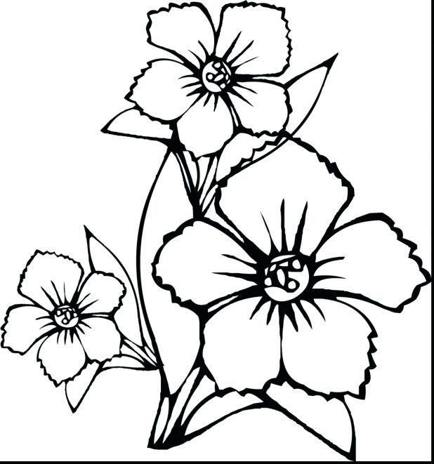 618x661 Ideas Of Draw Pretty Flowers Images About Outlines On Rose Outline