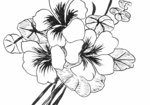 300x210 Beautiful Flower Drawing Pretty Drawings Of Flowers Clipart
