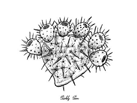450x338 563 Prickly Pear Cactus Stock Vector Illustration And Royalty Free