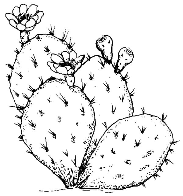 600x641 beware of cactus thorn coloring pages best place to color