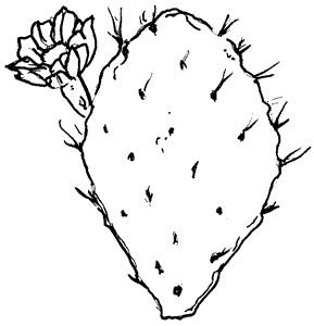 289x300 Logos And Images Texas Master Naturalist