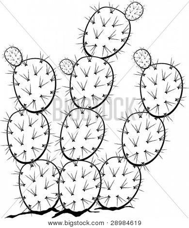390x470 Prickly Pear Nopal Plant Vector Amp Photo Bigstock