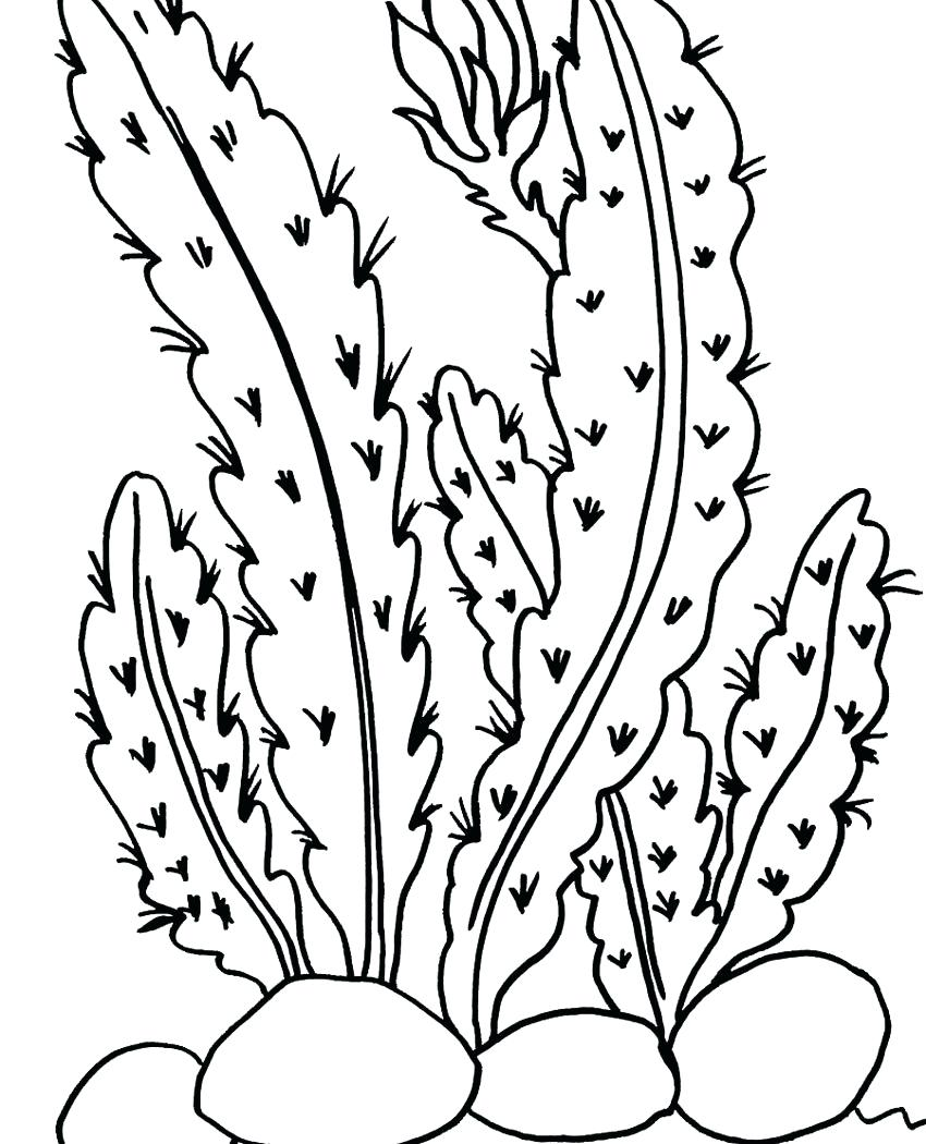 Prickly Pear Drawing at GetDrawings.com | Free for personal use ...