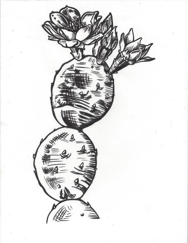 619x800 Drawings