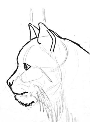 300x408 How To Draw A Lynx Face