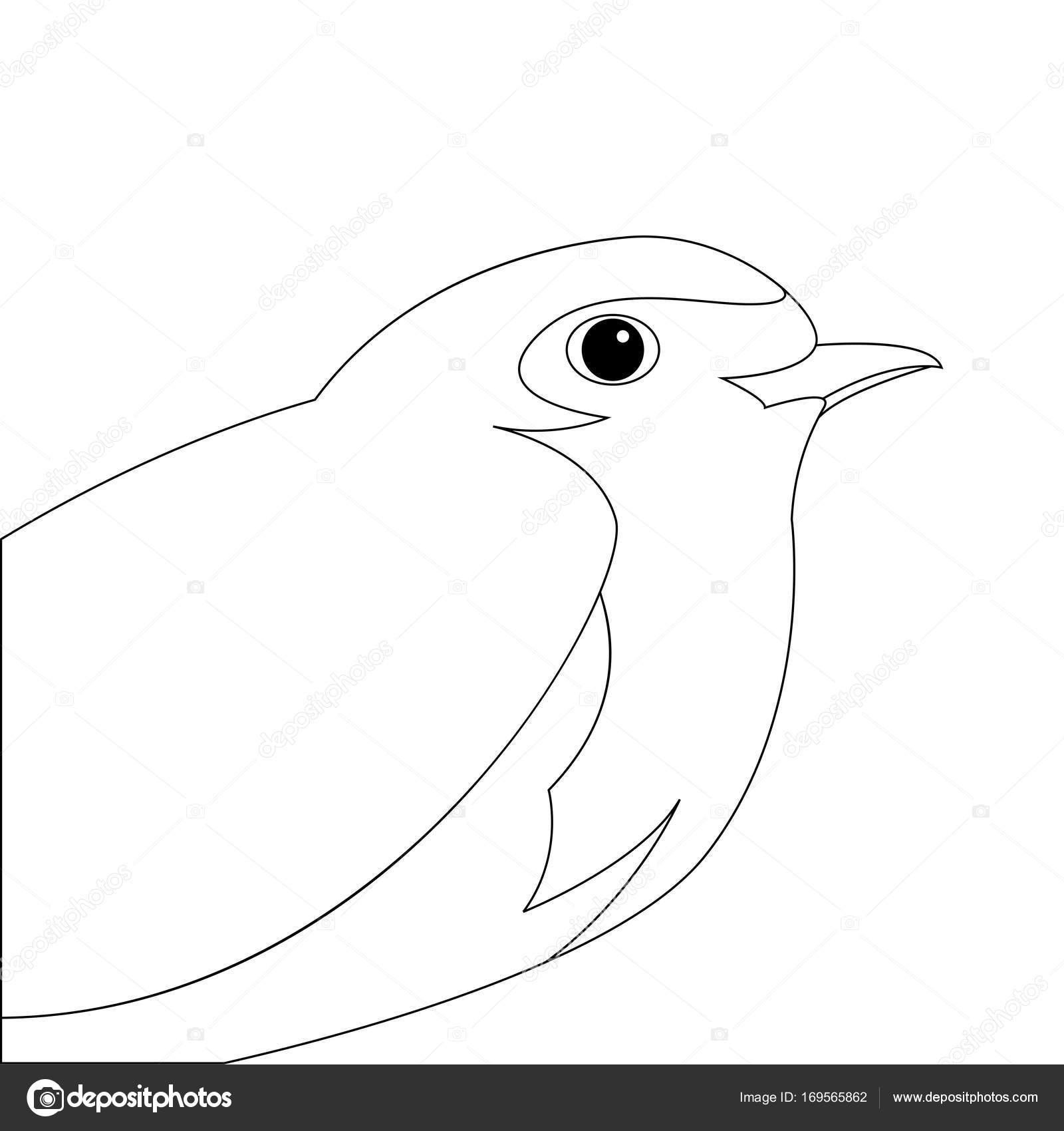 1600x1700 Robin Bird Vector Illustration Line Drawing Profile Side Stock