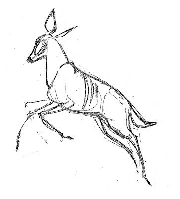 Pronghorn Drawing