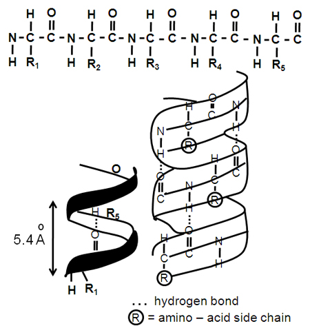Proteins Drawing