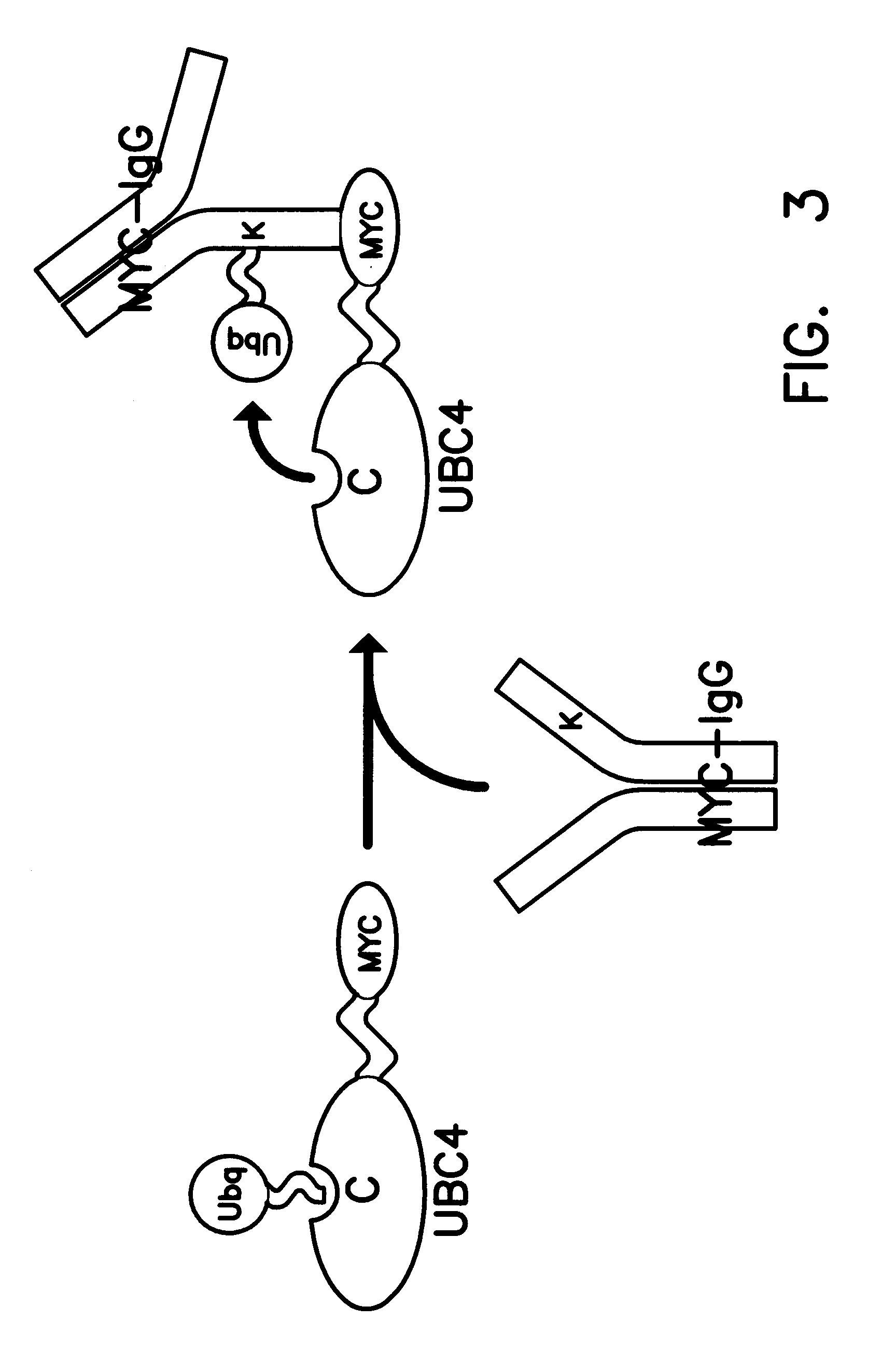 1728x2599 Patent Ep0626450a2