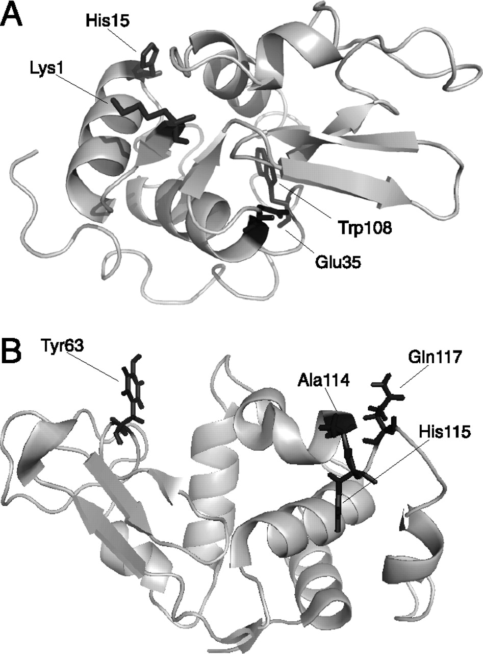 947x1280 A Protein's Conformational Stability Is An Immunologically