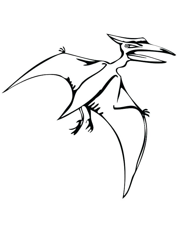 600x800 Pteranodon Coloring Page Skeleton Outline Drawing Fossil
