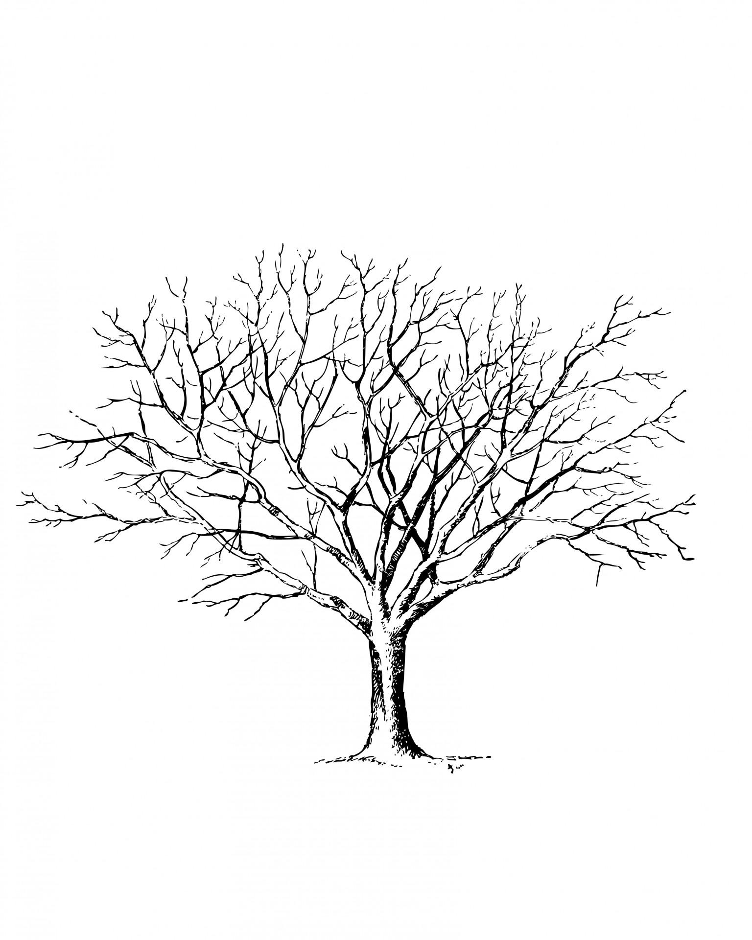 1536x1920 Tree Free Stock Photo