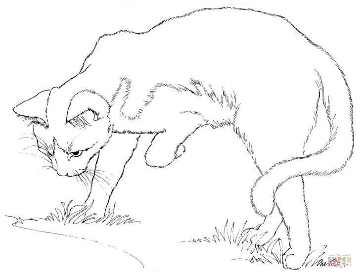 732x562 Cat Watching Himself In A Puddle Coloring Page Free Printable