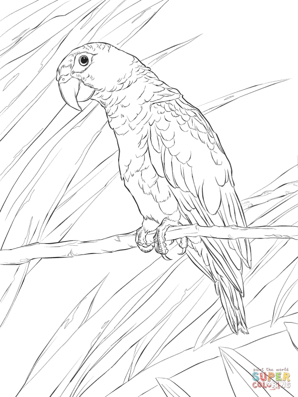 600x800 Realistic Puerto Rican Parrot Detailed Coloring Pages For Adults