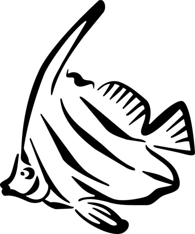 685x821 Angelfish Clipart Puffer Fish