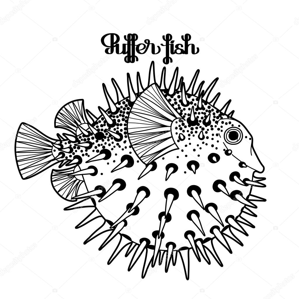 1024x1024 Graphic Puffer Fish Stock Vector Homunkulus28