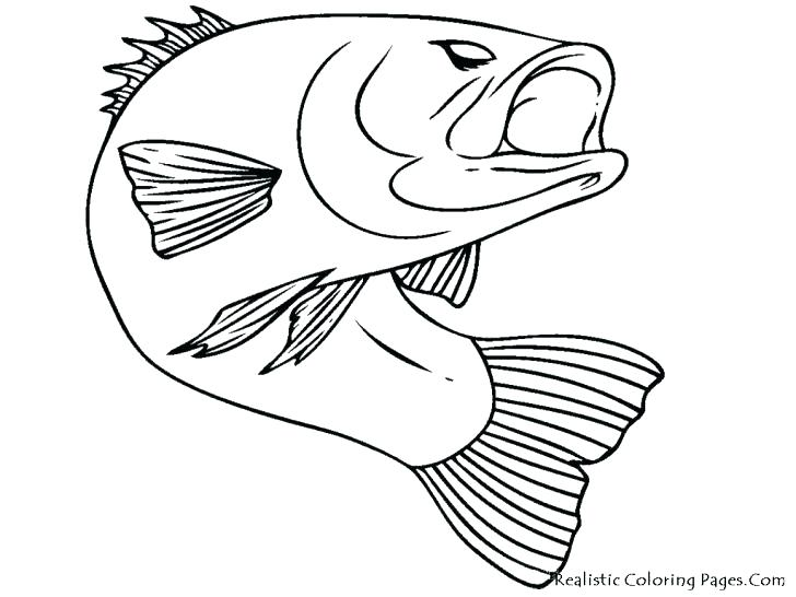 728x546 Realistic Fish Coloring Pages Gigantic Puffer Fish Coloring Pages