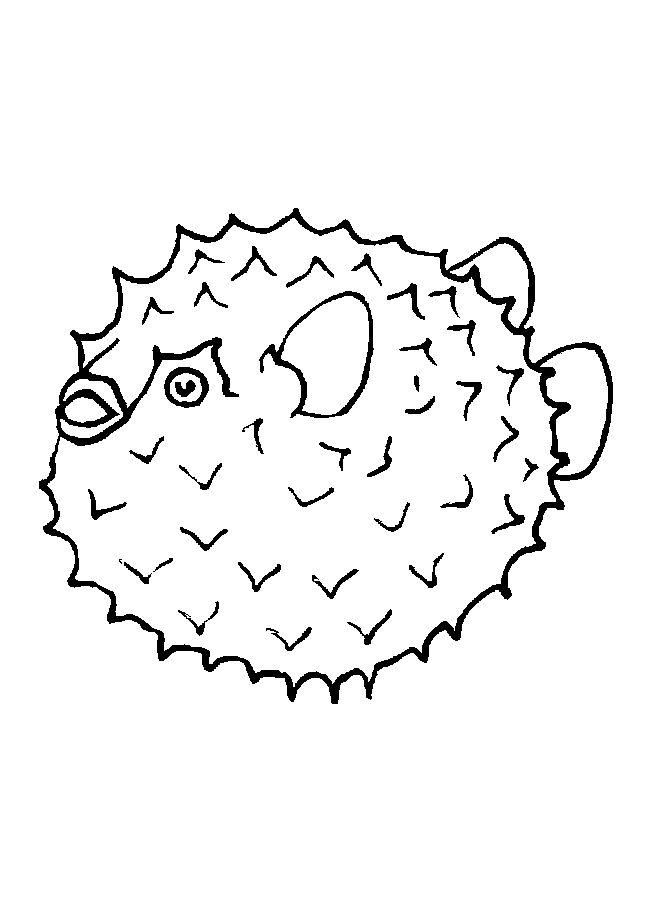 650x900 Puffer Fish Clip Art 62. How To Draw A Puffer Fish. Blunthead