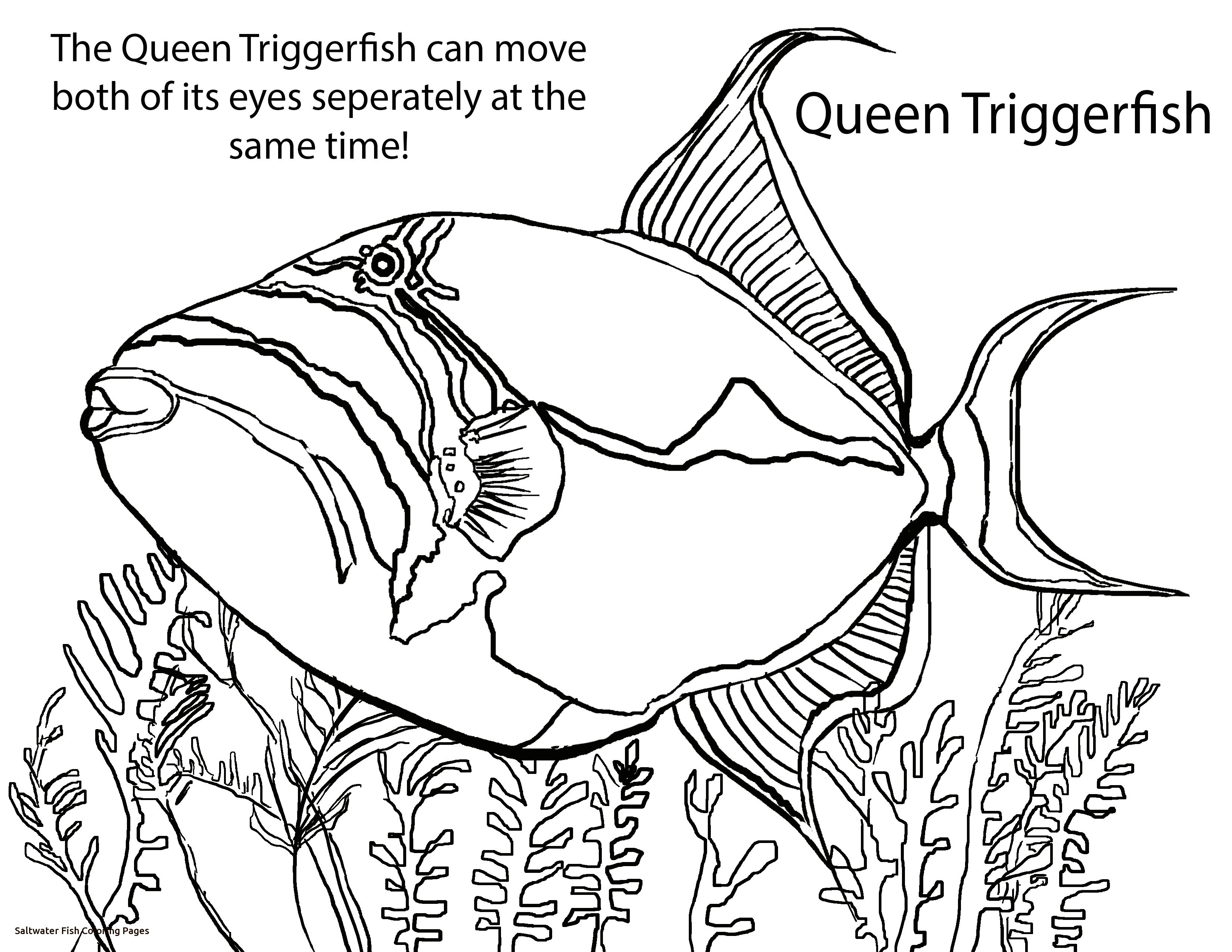 3300x2550 Freshwater Fish Coloring Pages Fresh Pin Drawn Angelfish Tropical