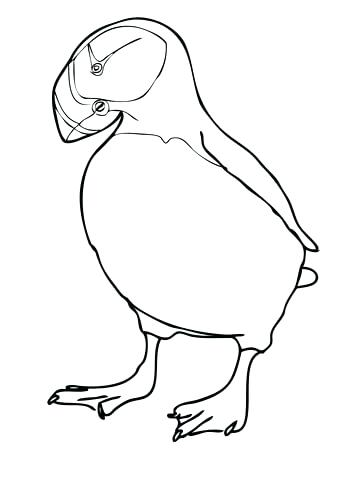 360x480 Puffin Coloring Page Click To See Printable Version Of Horned