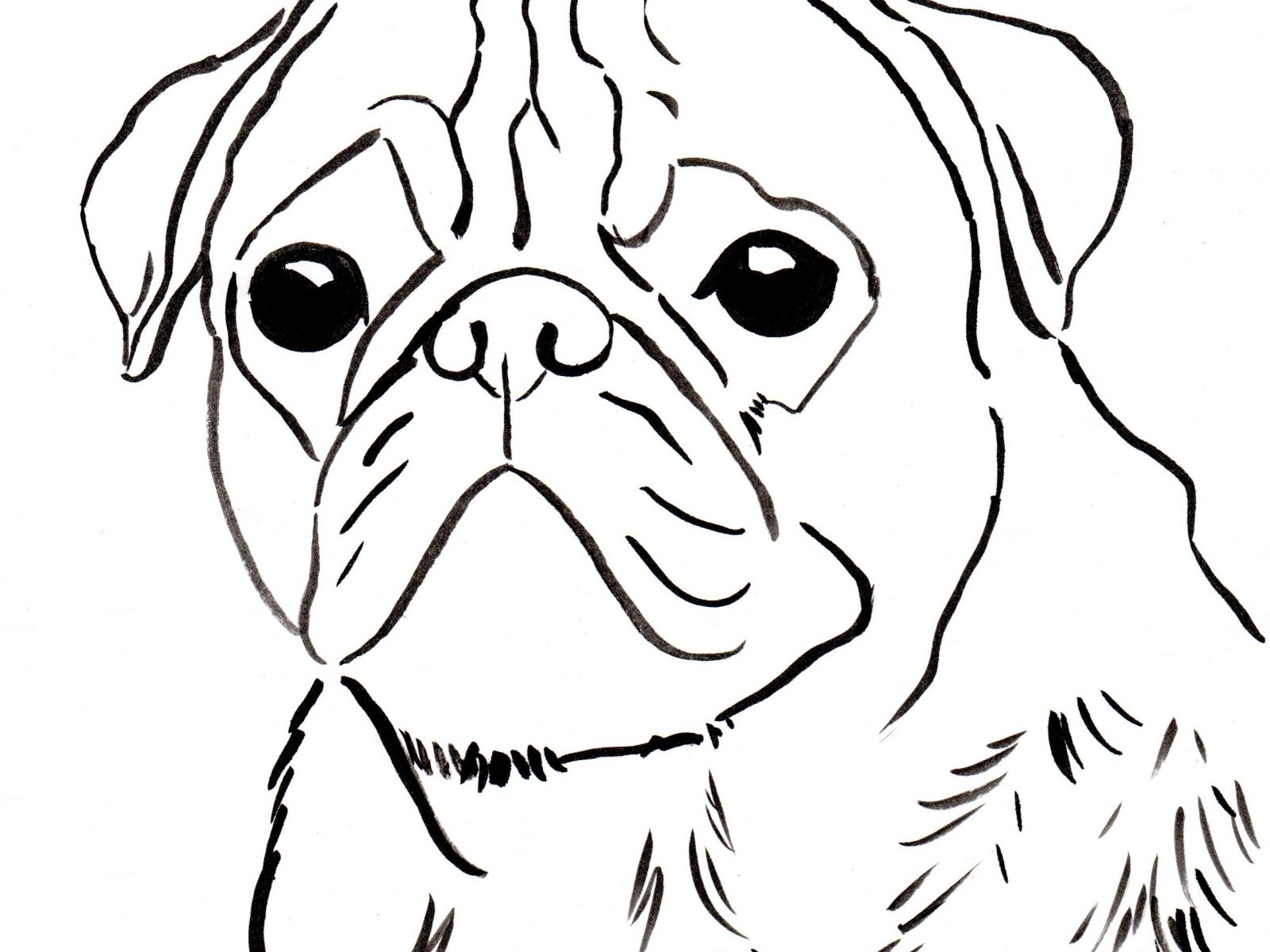 1600x1200 Marvelous Realistic Pug Dog Coloring Pages Free Printable Animals