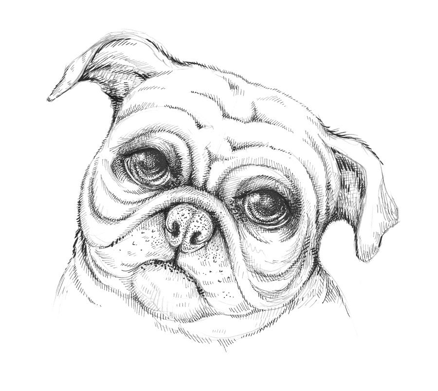 900x803 New Tutorial Drawing A Pug Dog Eugenia Hauss