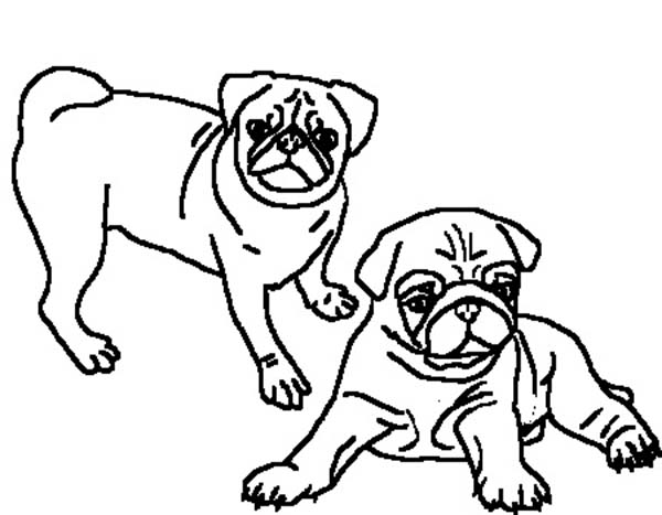 600x467 Pug Pictures To Color Kids Coloring Page