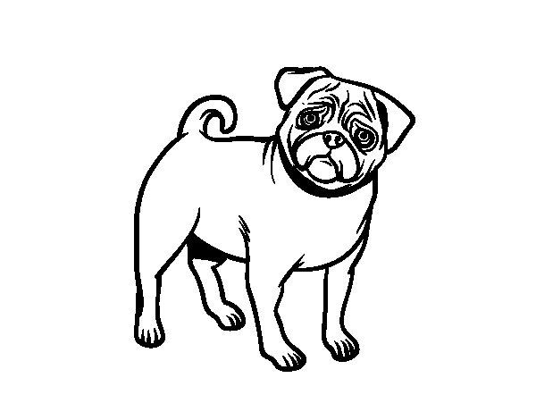 600x470 Pug Dog Coloring Page